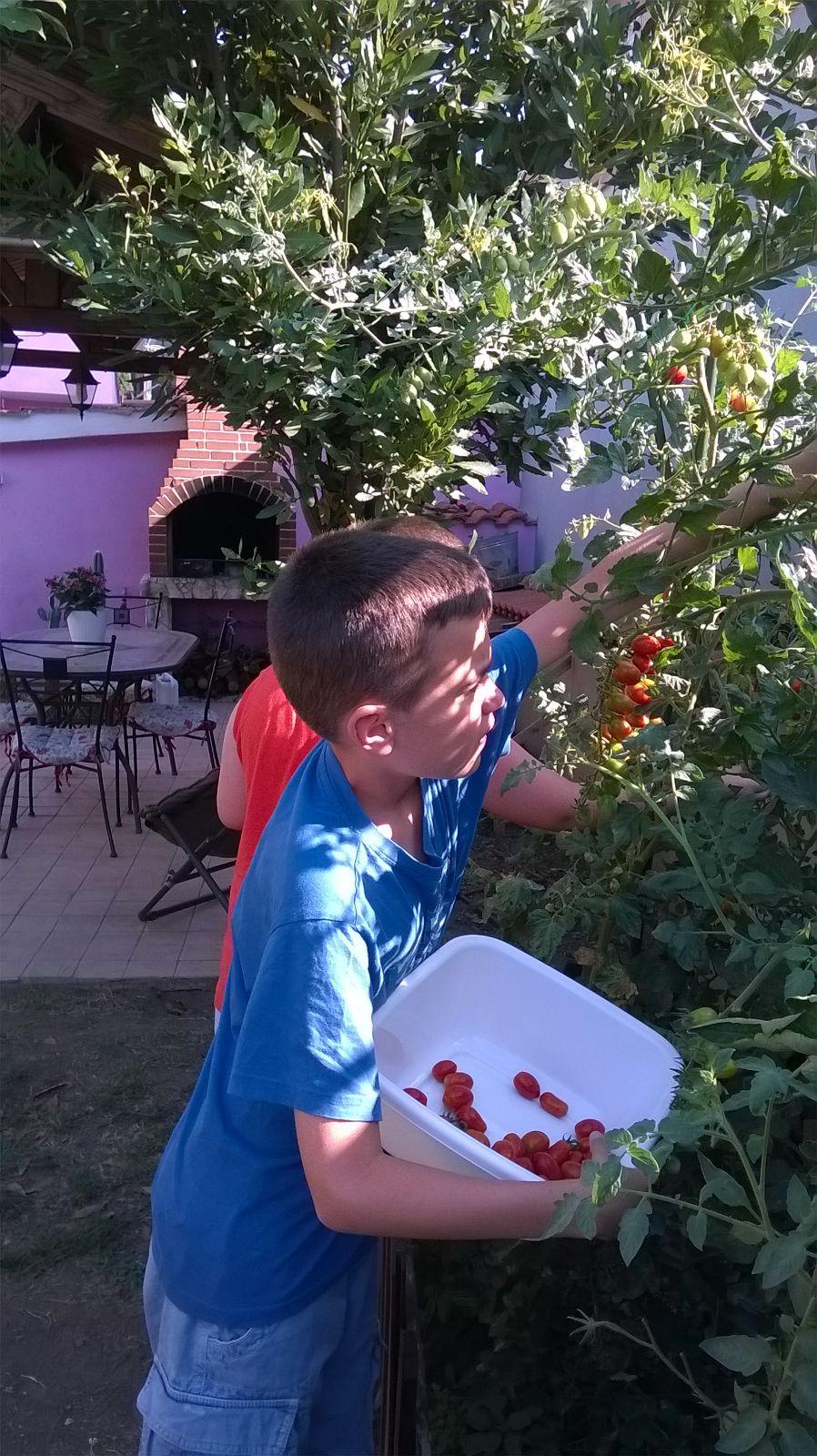 Pomodori 1